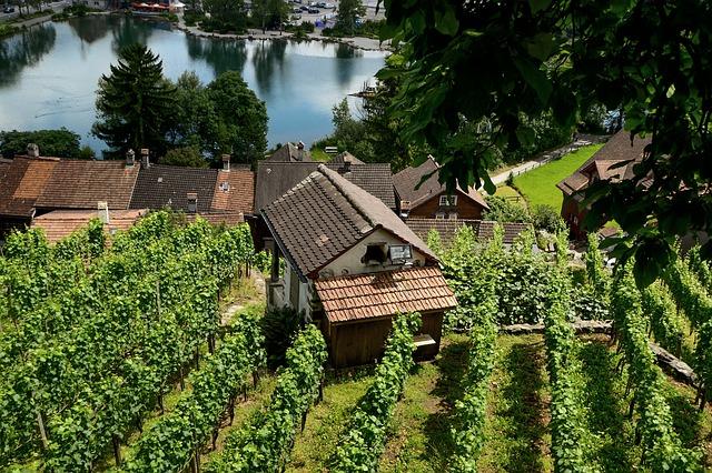Vignoble près de Werdenberg
